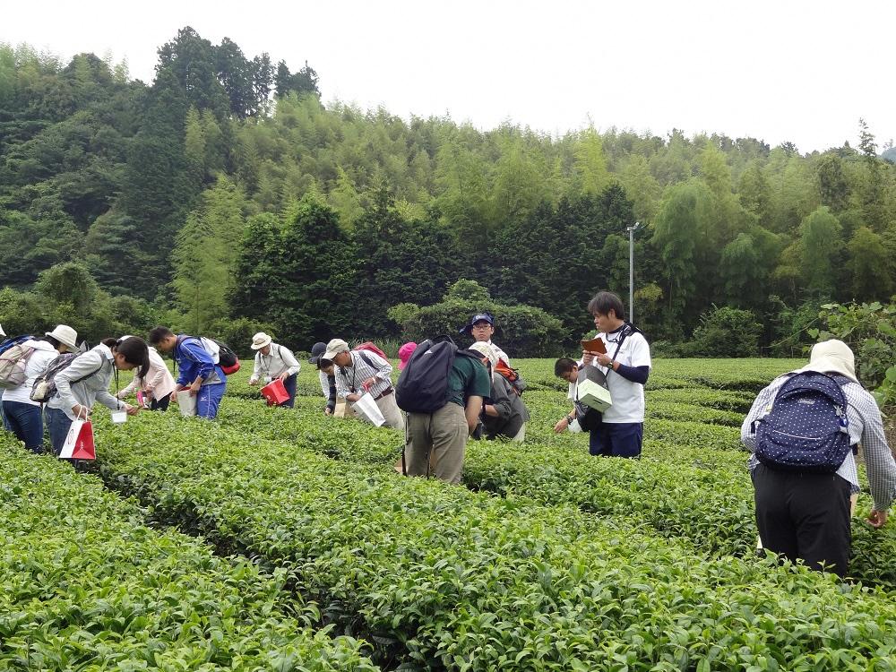 2018 [Image of Shizuoka City Tea School]