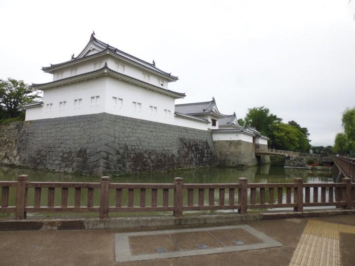 駿府城にも「お茶の木」あります。の画像