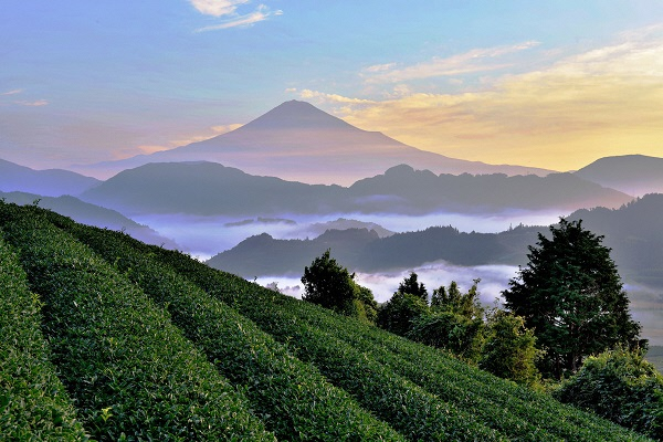 5月2日は八十八夜!~美味しい静岡市のお茶で癒しのひと時を~の画像