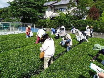 【※締め切りました】平成30年度「静岡市お茶の学校」募集終了のお知らせ ~静岡市のお茶の魅力を発信したいあなたへ~の画像