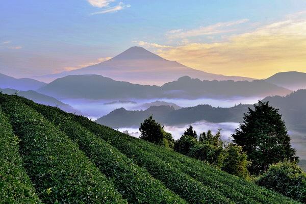 【平成30年度静岡市お茶の日記念事業】45事業が終了しました。の画像