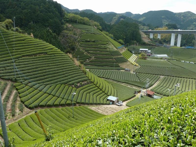 7/5(日)おうちdeお茶会 直送LIVE 静岡・森内茶農園でお茶の飲み比べ体験開催!の画像