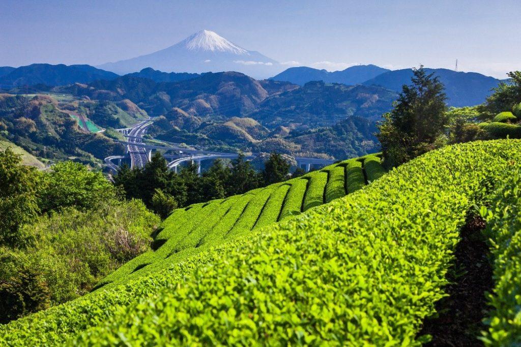 【令和2年度お茶の日記念事業】全30事業を実施しました。の画像