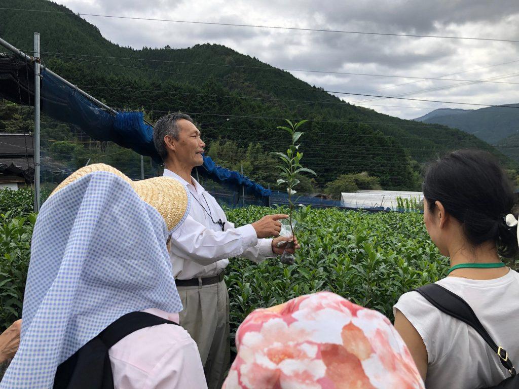 【募集は終了しました】令和3年度「静岡市お茶の学校」受講生募集!の画像